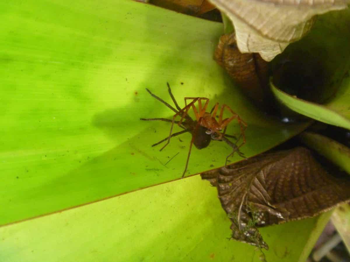 Spiders in the Cloud Forest; Bellavista Reserve, Tandayapa, Ecuador | ©Angela Drake