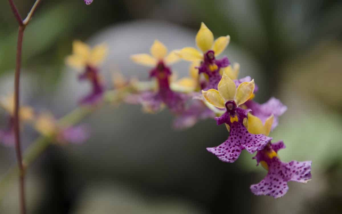 The Orchids at the Quito Botanical Garden