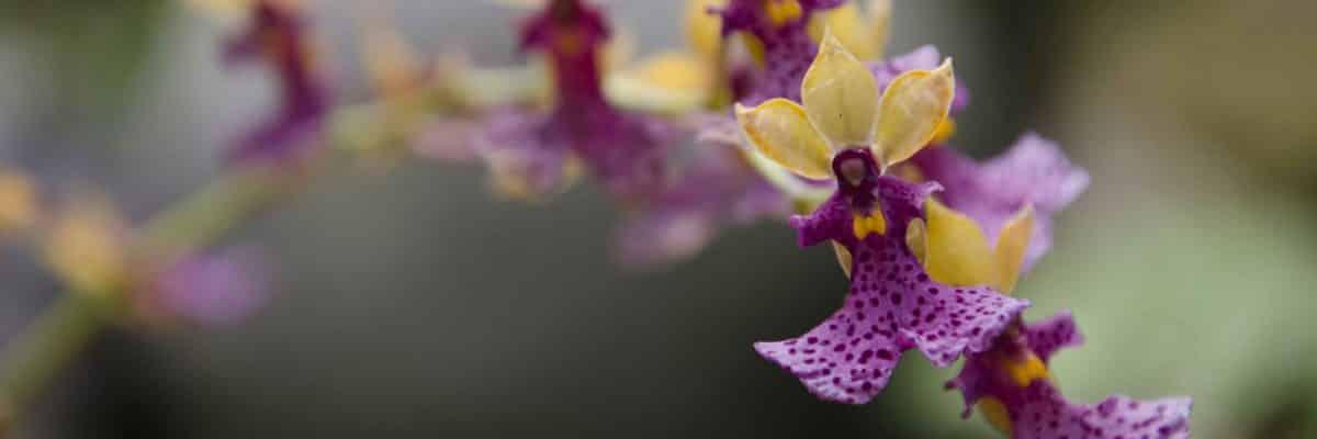 Orchids from the Botanical Garden, Parque Carolina, Quito, Ecuador