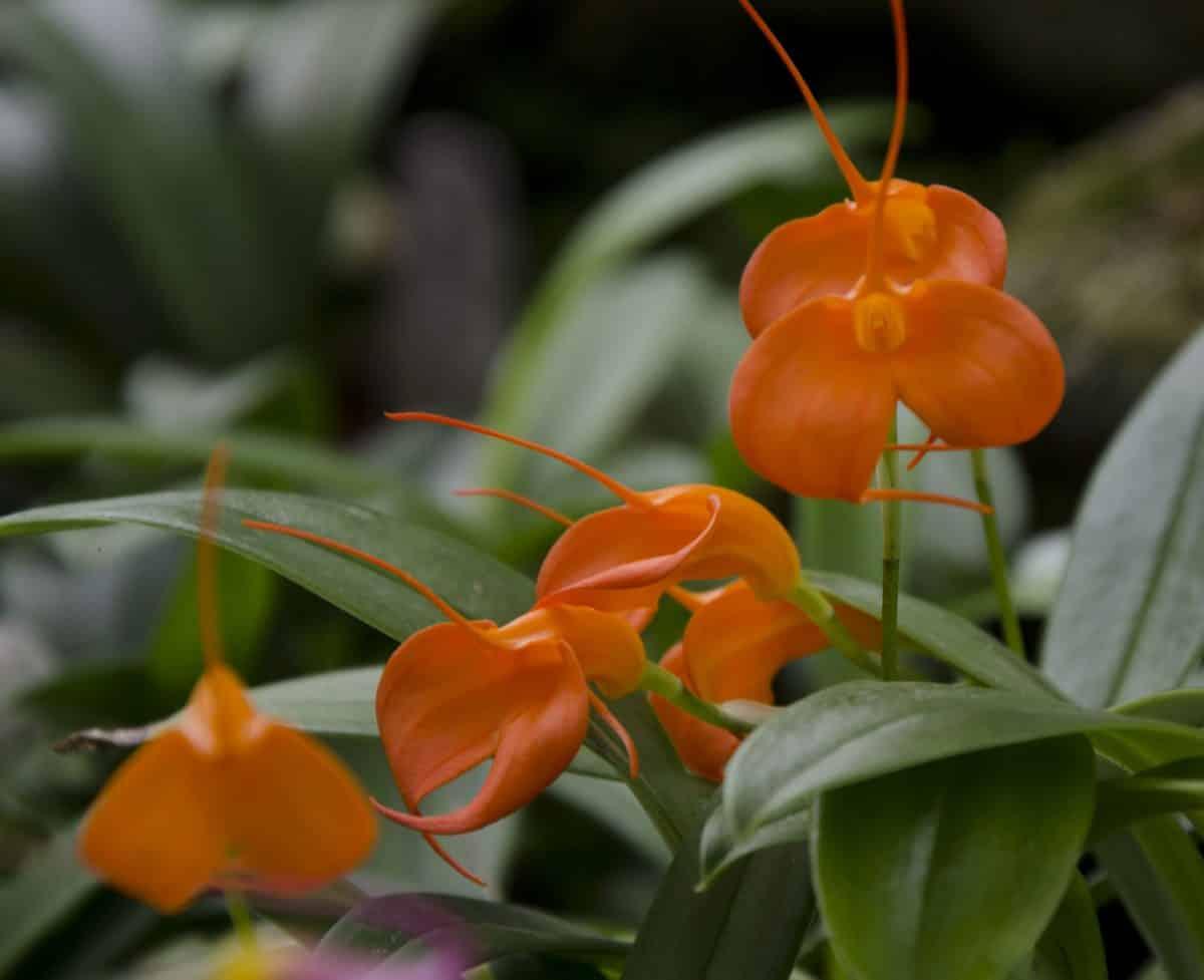 Orchids at the Quito Botanical Garden, Ecuador