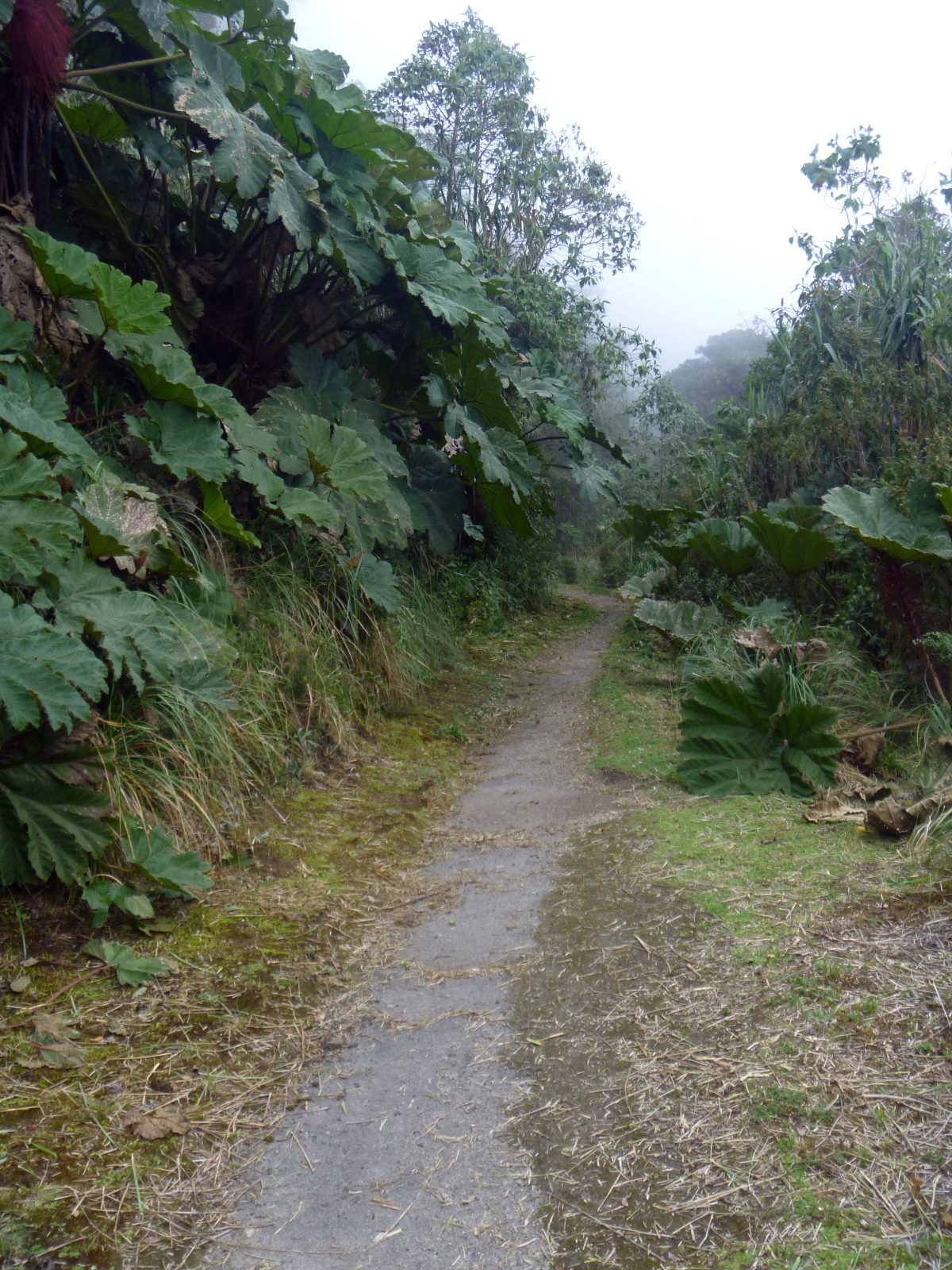 A little ways in, the trail begins to narrow but is kept accessible by machete   ©Angela Drake