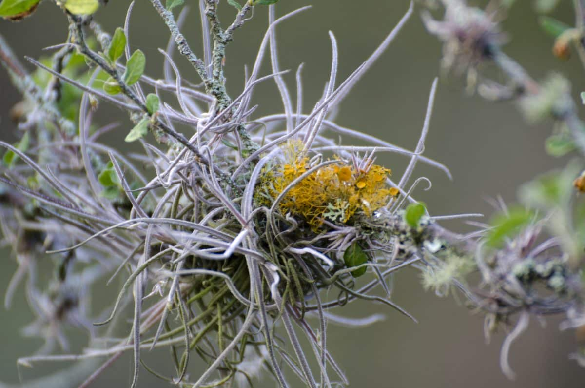 Small epiphytes grow on many of the bushes and trees in this high desert landscape | ©Angela Drake