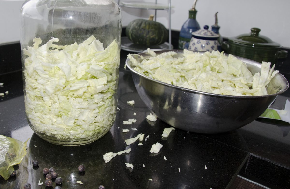Sliced cabbage tossed with salt being placed in the pickling jar.