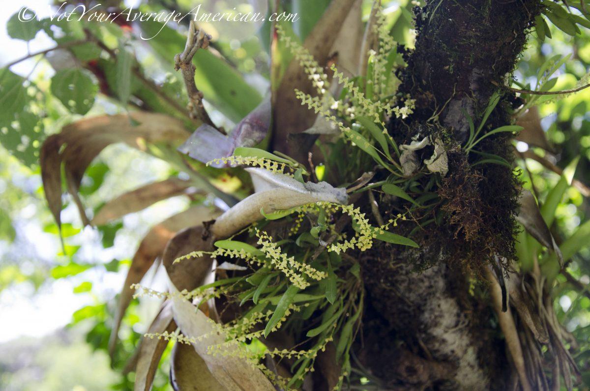 Tiny orchids; Cascada Condor Machay, Ecuador