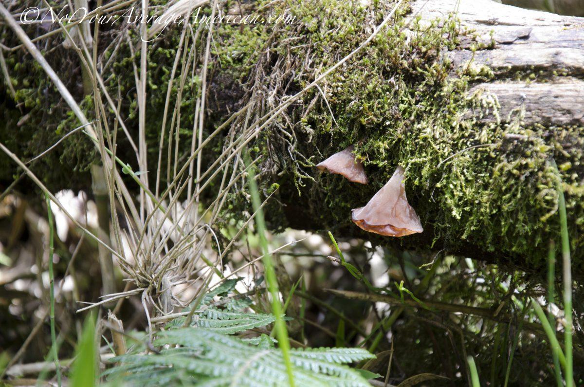 Mushrooms; Cascada Condor Machay, Ecuador