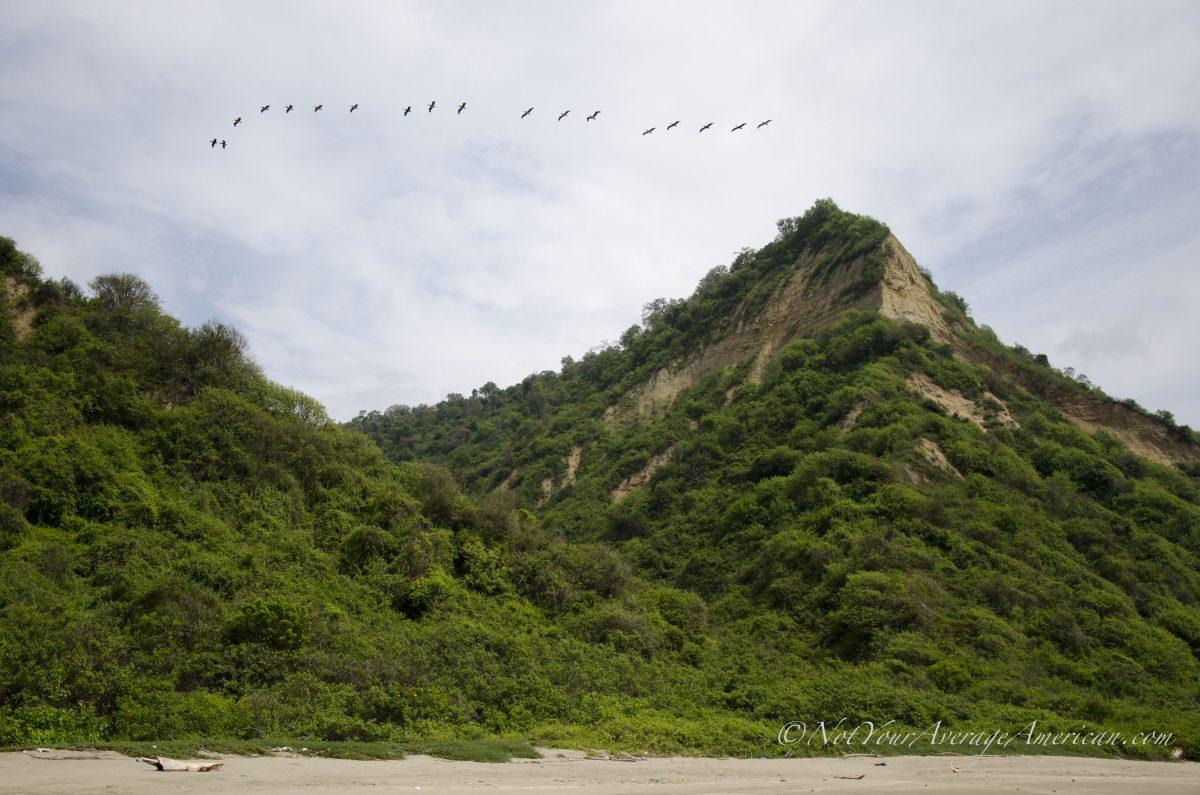 Dry Tropical Forest, Chirije Forest, Coastal Ecuador