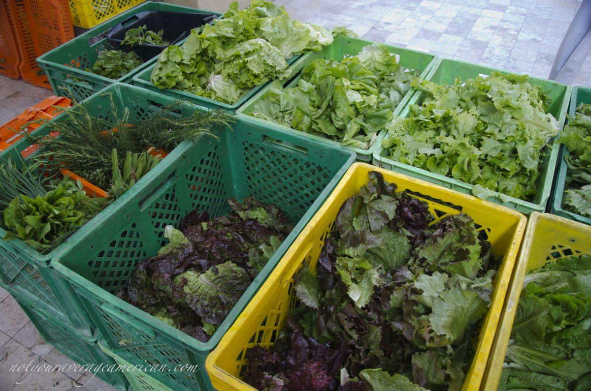 Lettuces in a myriad of colors and varieties, Mercado La Esquina, Cumbaya, Ecuador