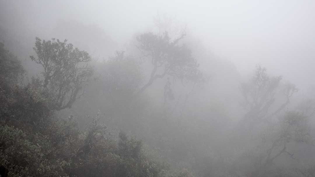 Typical low clouds of the Papallacta Range in the Cayambe Coca National Park   ©Angela Drake