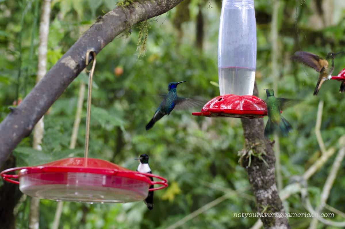 The feeders at the Bellavista Lodge are a constant source of entertainment   ©Angela Drake