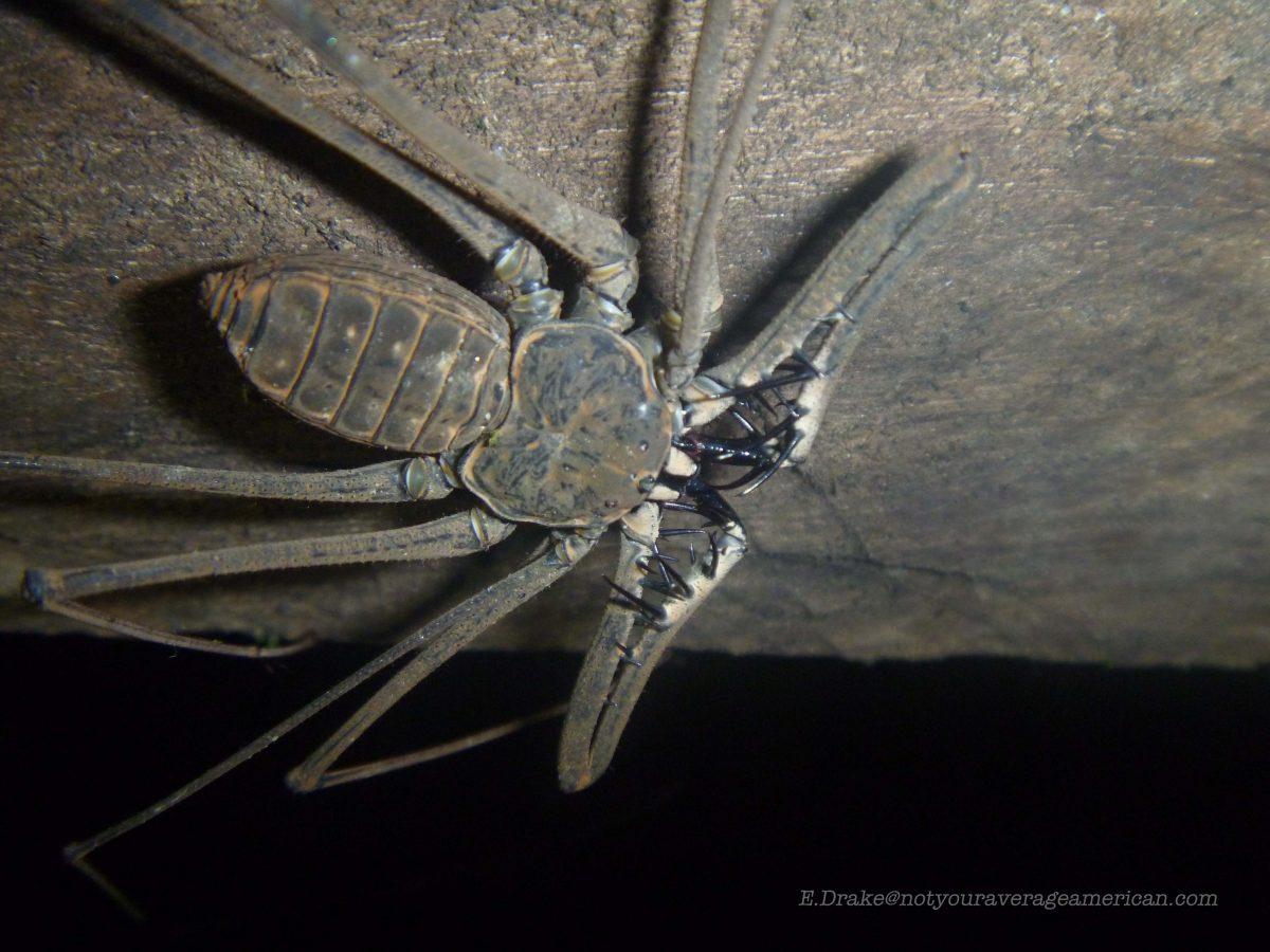 Creepy Crawlies of the Night
