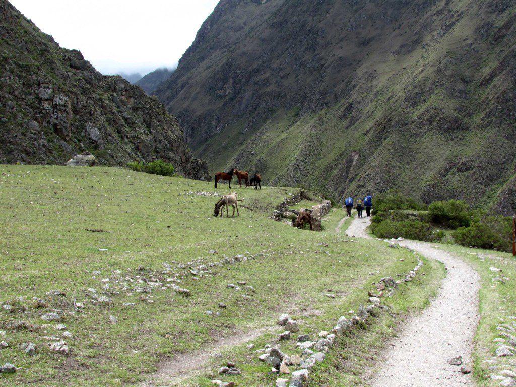 On the trail near Llactapata
