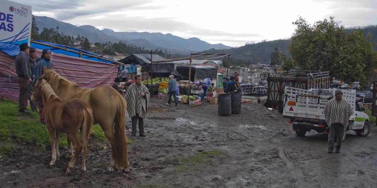 Horses for sale at the animal market, Otavalo, Ecuador | ©Angela Drake
