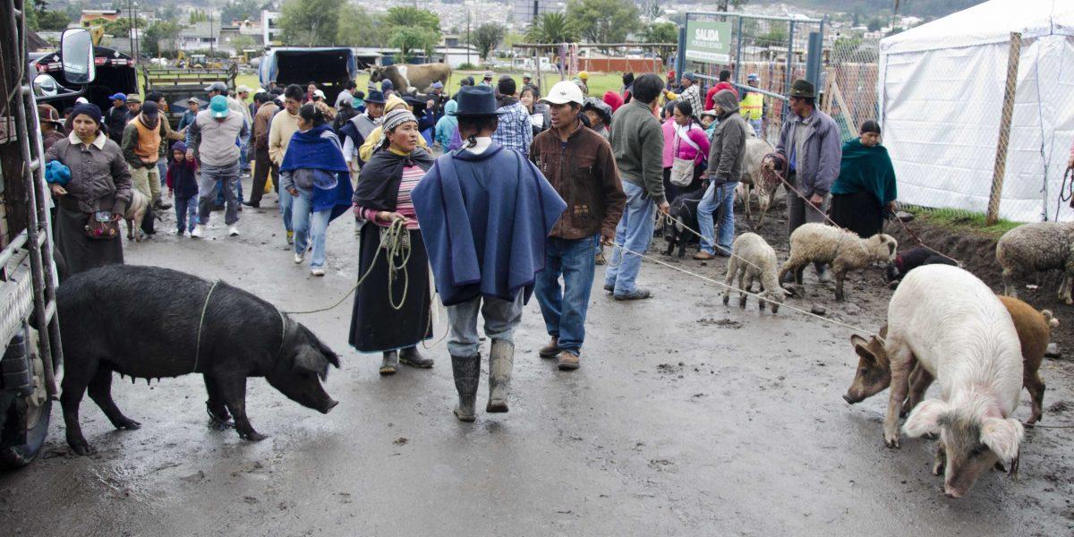 Pig vendors at the animal market, Otavalo, Ecuador | ©Angela Drake