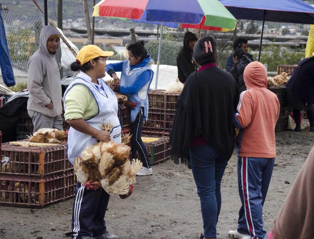 Selling chickens at the animal market, Otavalo, Ecuador | ©Angela Drake