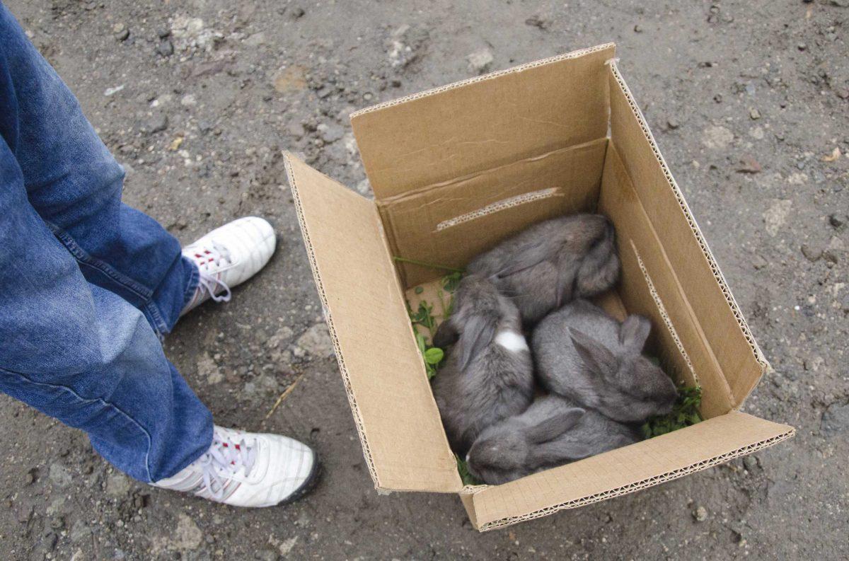 Baby rabbits for sale at the animal market, Otavalo, Ecuador | ©Angela Drake