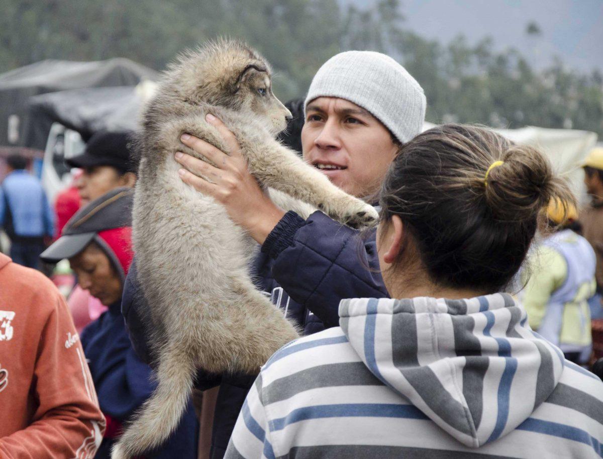 Puppy love at first sight, Otavalo Animal Market, Ecuador | ©Angela Drake
