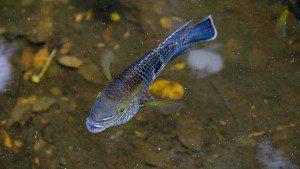 Irridiscent Fish