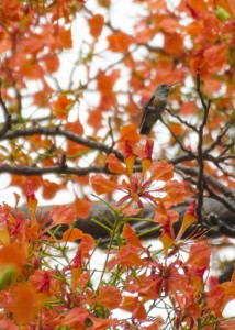 Can you spot the hummingbird?