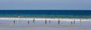Assorted Shore Birds