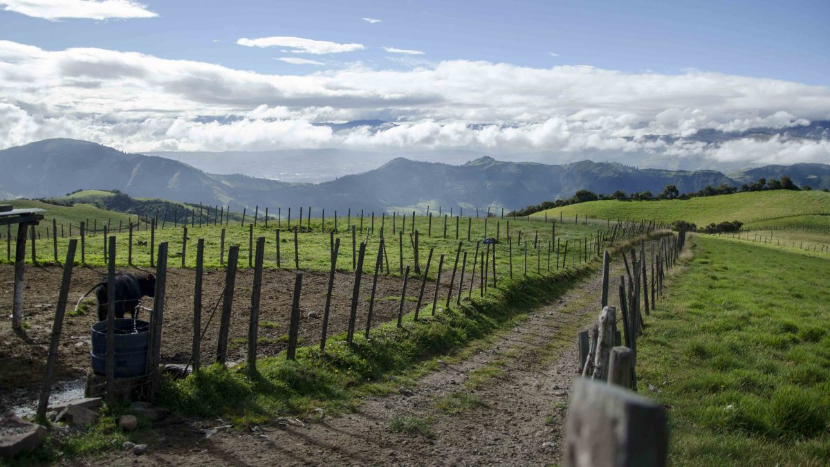 High Altitude Farms, Road to the Refugio of Guagua Pichincha, Ecuador