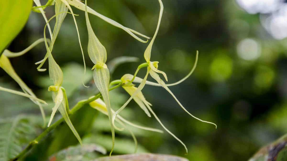 The Orchids of Cabañas San Isidro