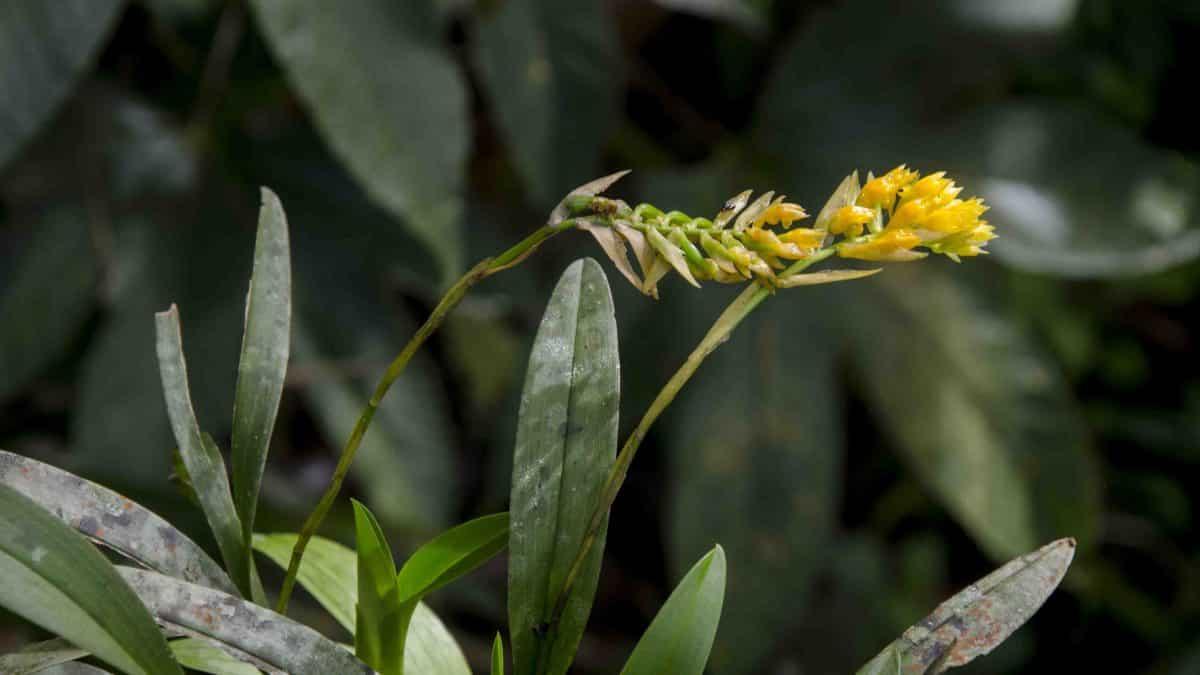 Orchids at Cabañas San Isidro