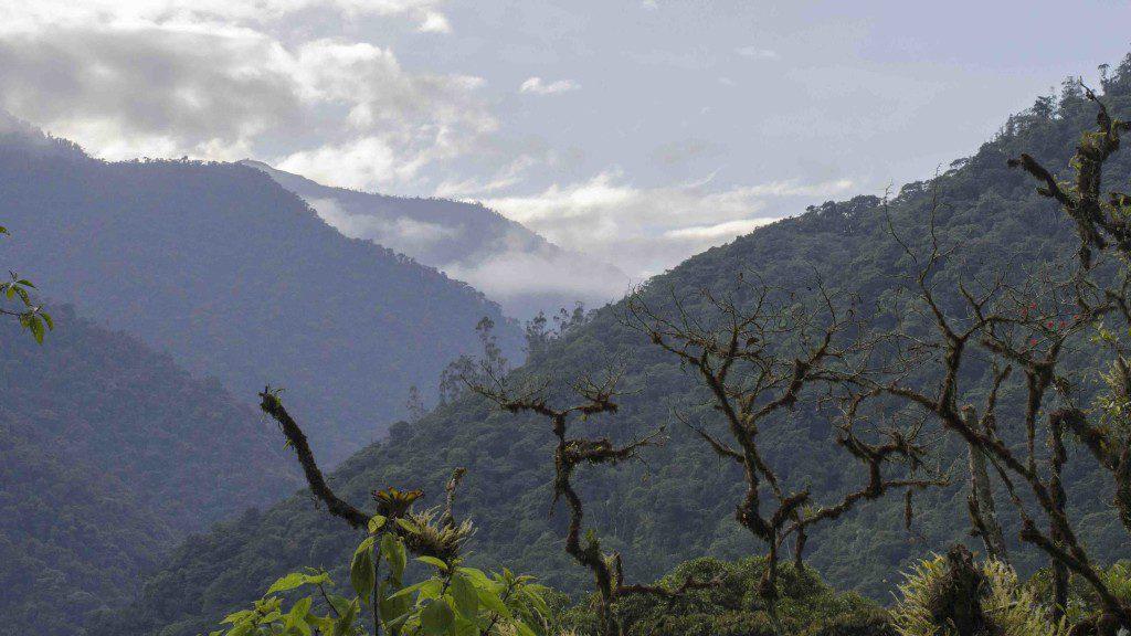 View from San Jorge Tandayapa Reserve