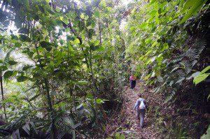 Trails at San Jorge Tandayapa Lodge