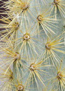 Cactus Spines, Interpretation Center, San Cristobal
