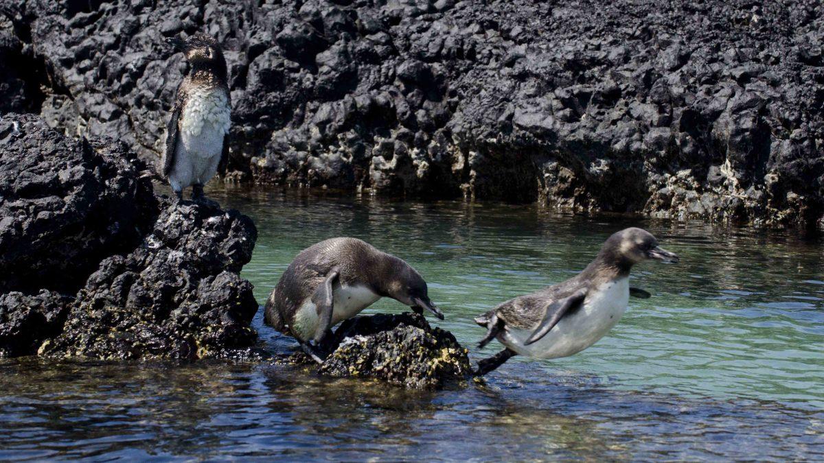 Las Tintoreras – Isla Isabela