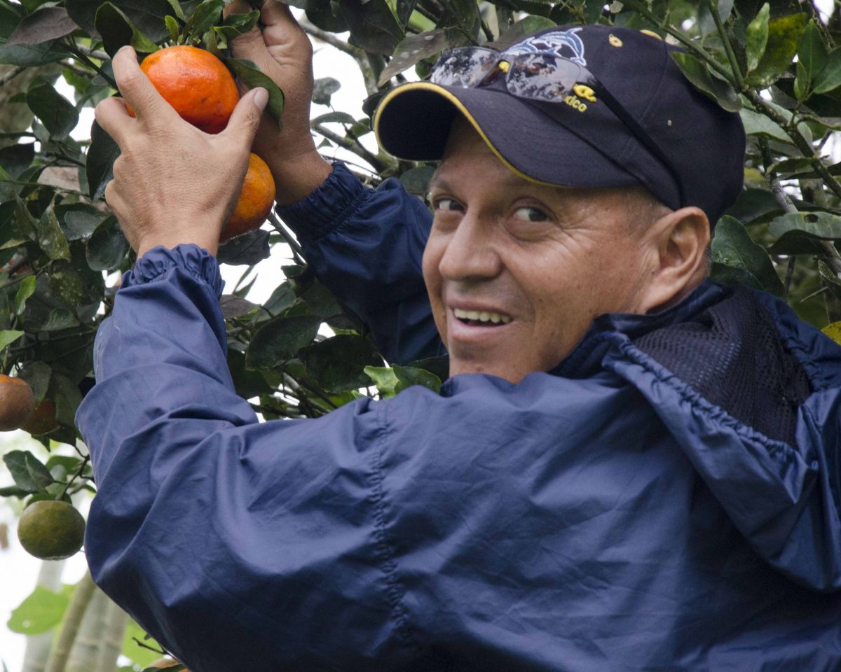 Our guide picking mandarins, San Cristóbal
