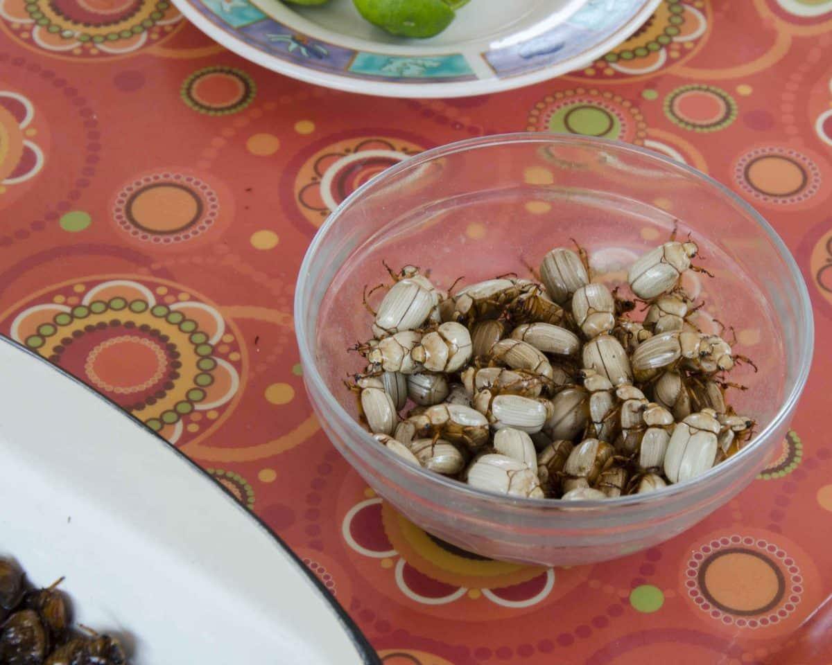 Freshly harvested white catzos, a type of edible beetle | ©Angela Drake