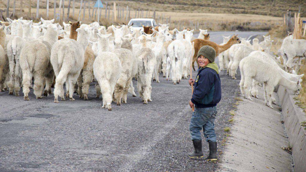 Young Shepherd of Chimborazo