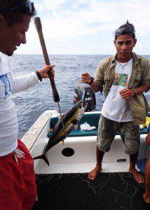 Freshly Caught Yellow Fin Tuna
