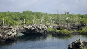 Lava Islands at Los Tuneles, Isla Isabela, The Galapagos