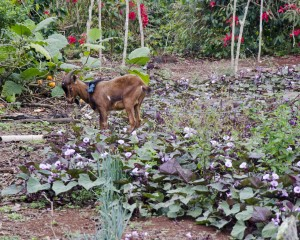 Farm on San Cristobal