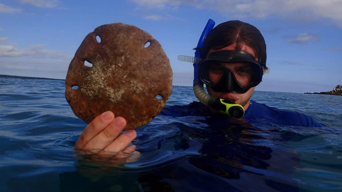 Snorkeling got you down? Travel Health Insurance could provide the fix. | Photo taken in the Galapagos Islands, Ecuador ©Angela Drake