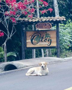 Otoy Restaurant and Farms