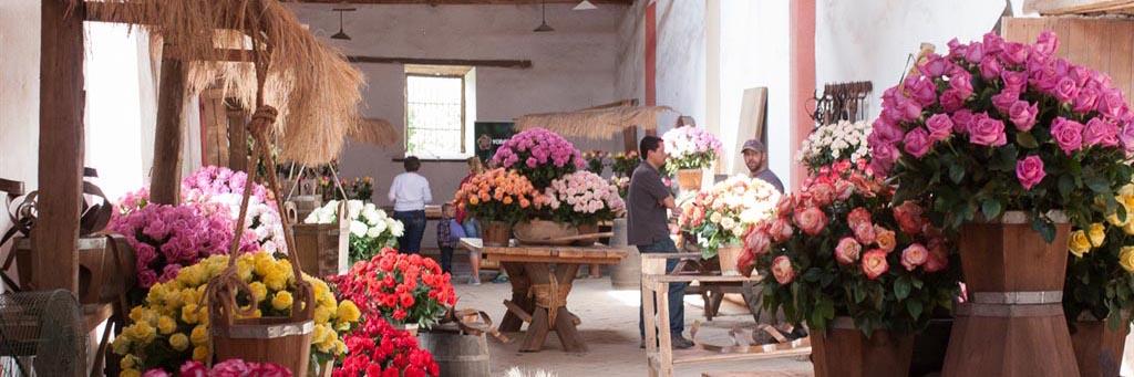 The Rose Hacienda