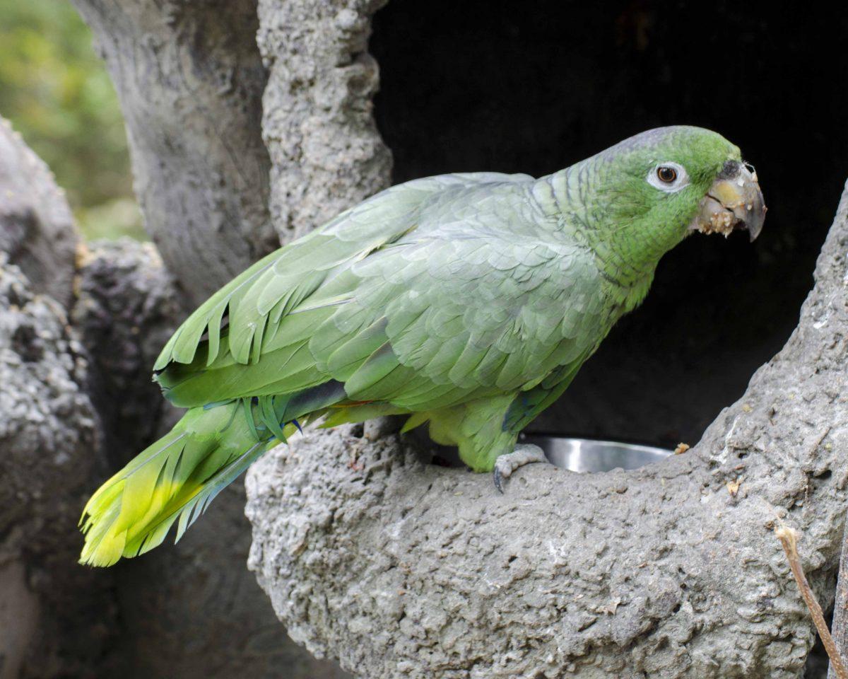 Parrot, Parque Histórico, Guayaquil, Ecuador  | ©Angela Drake