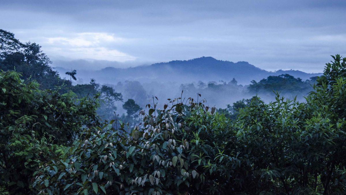 Early Morning from Top Floor of the San Jorge de Milpe Lodge, San Miguel de los Bancos, Ecuador | ©Angela Drake