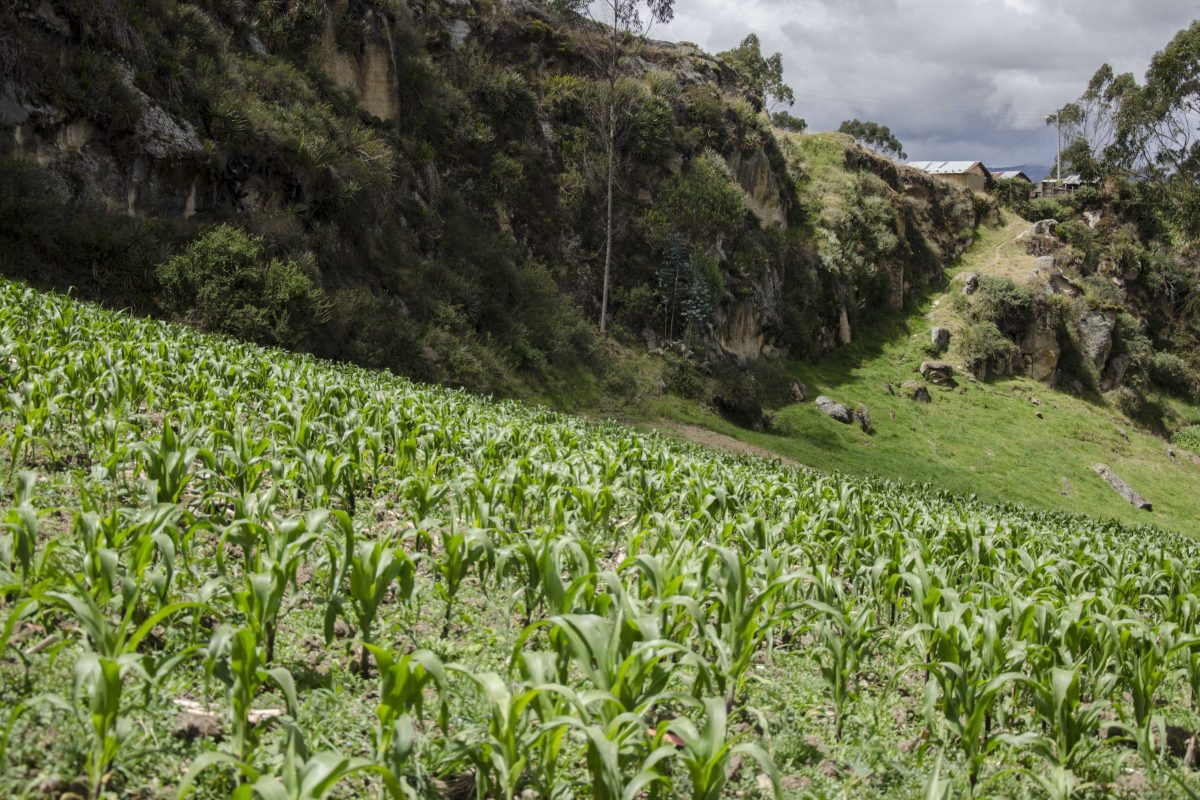 Ingapirca – The Trail