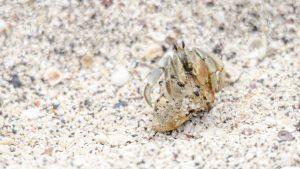 Hermit Crab, Interpretation Center, San Cristobal
