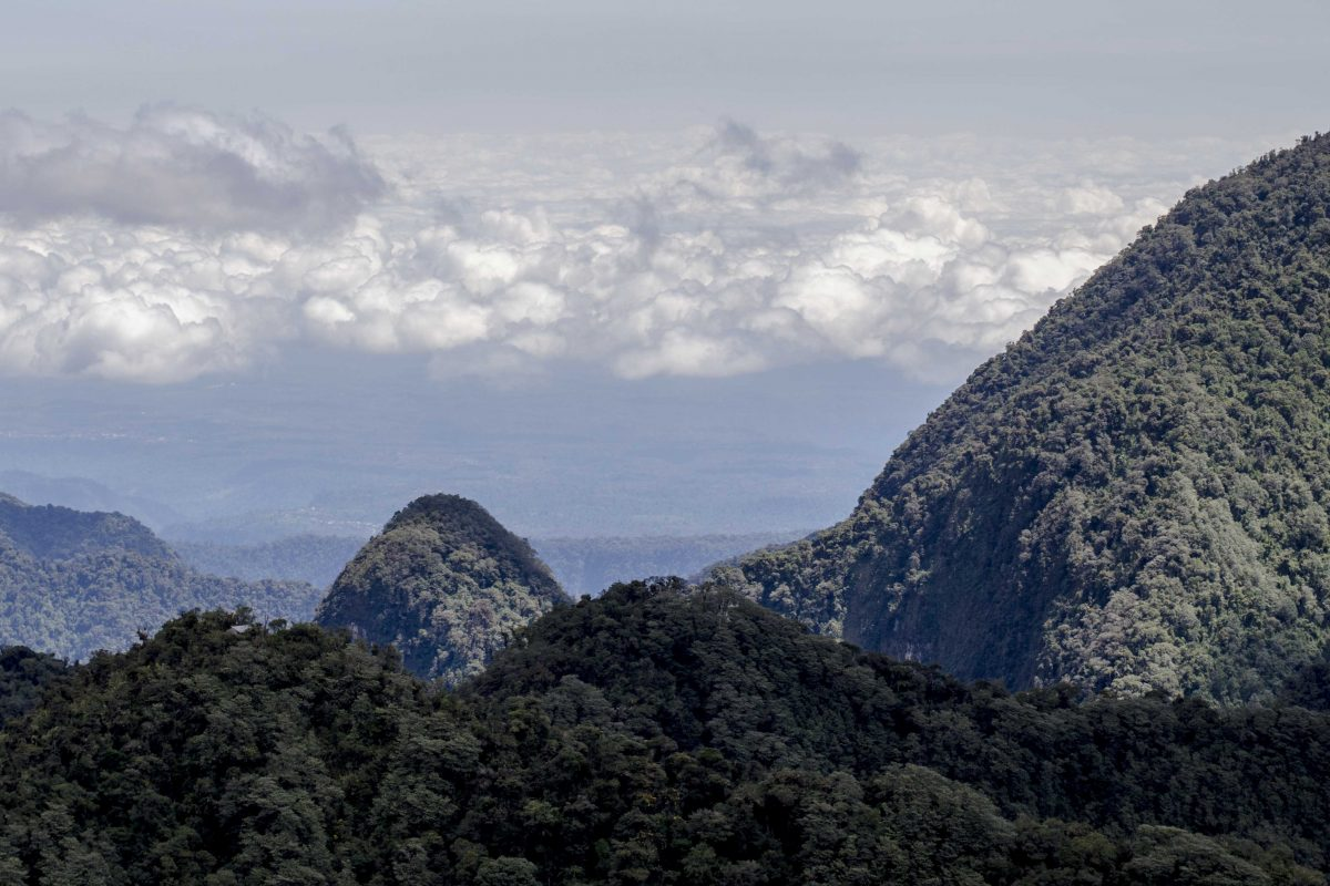 A Hop, Skip, and a Jump from Quito – Yanacocha Reserve