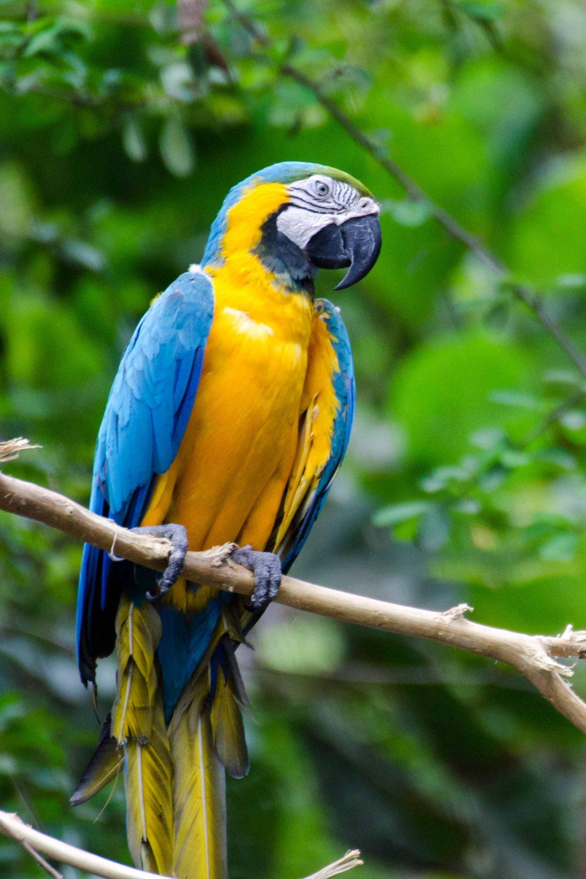 A Blue Macaw, Parque Histórico, Guayaquil, Ecuador | © Angie Drake / Ecuador Por Mis Ojos