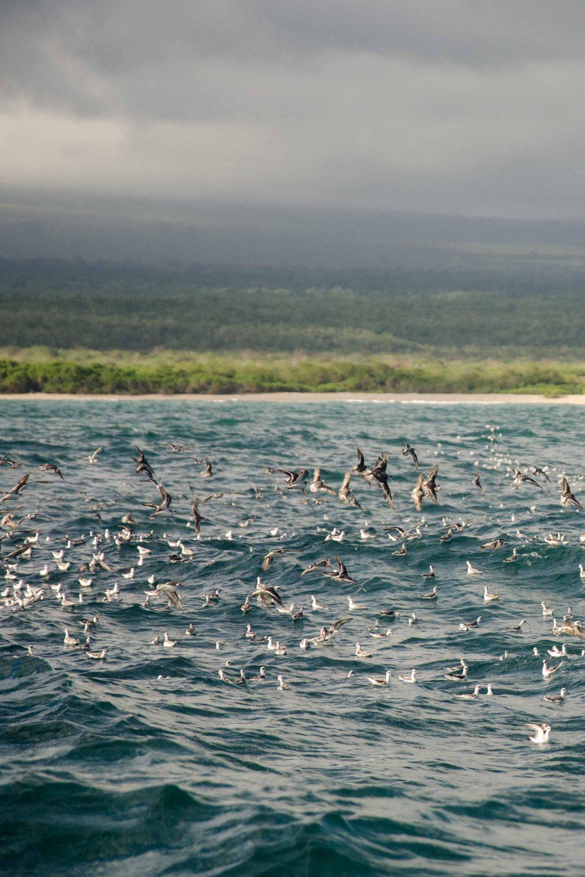 Flock of birds takes flight, Isla Isabela, The Galapagos, Ecuador | ©Angela Drake / Not Your Average American