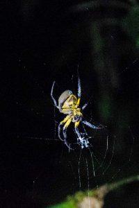 Pastaza Province, Spider