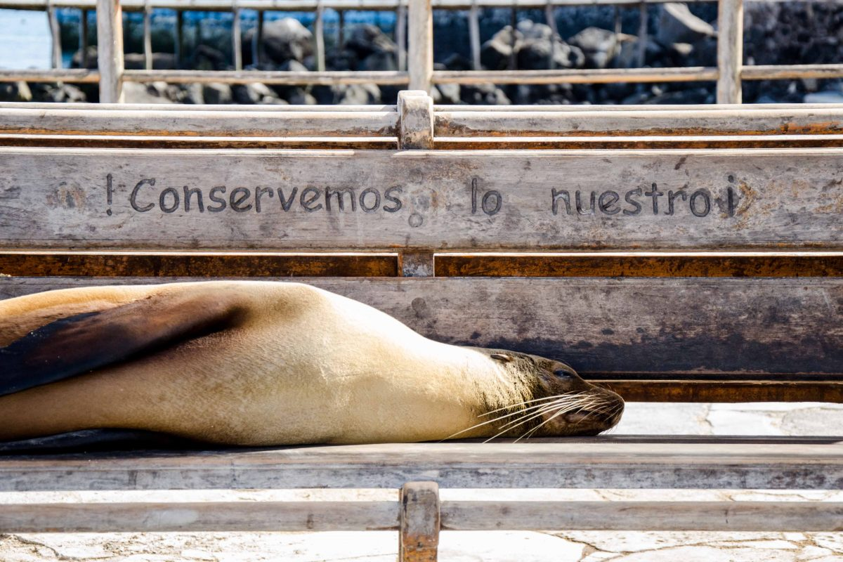 New Galapagos Entry Rules for 2018