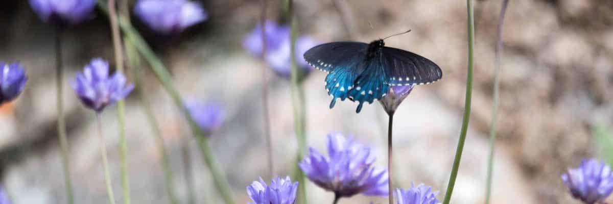 Butterflies and Blooms at Buttermilk Bend