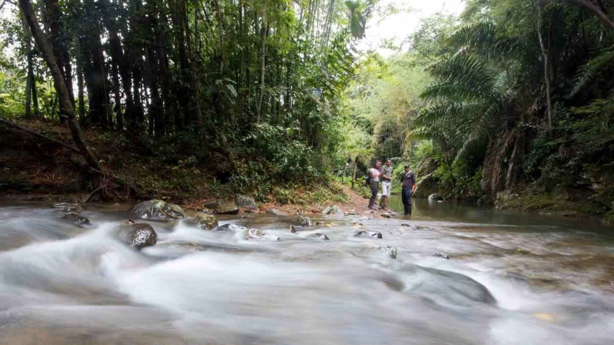 The Rio Chirapi, Pacto, Ecuador